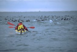 Kayaking Kouchibouquac National Park - Photo Credit: Tourism New Brunswick